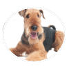 AIREDALE TERRIER circle