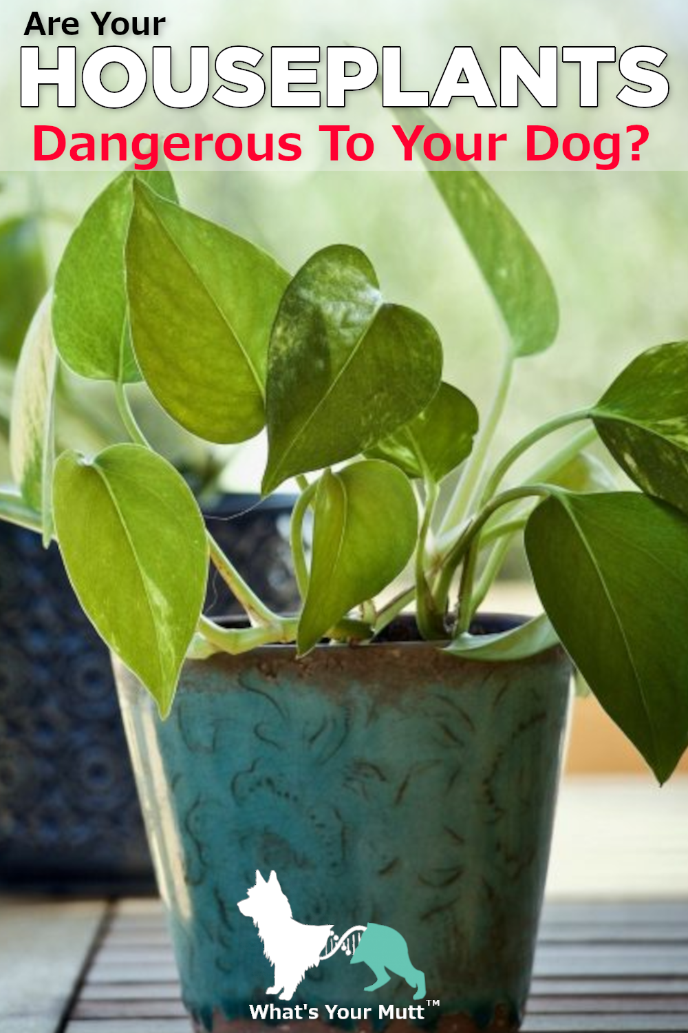 What's Your Mutt DNA Houseplants Dangerous For Dogs