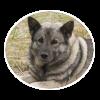 Norwegian Elkhound circle