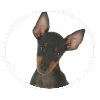 Toy Manchester Terrier circle
