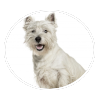 West Highland White Terrier circle