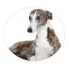 Whippet circle
