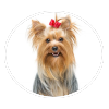 Yorkshire Terrier circle