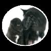 belgian sheepdog circle