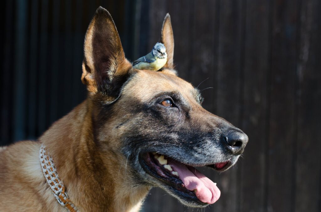 What's Your Mutt DNA Close up of a dog with a small bird sitting on its head