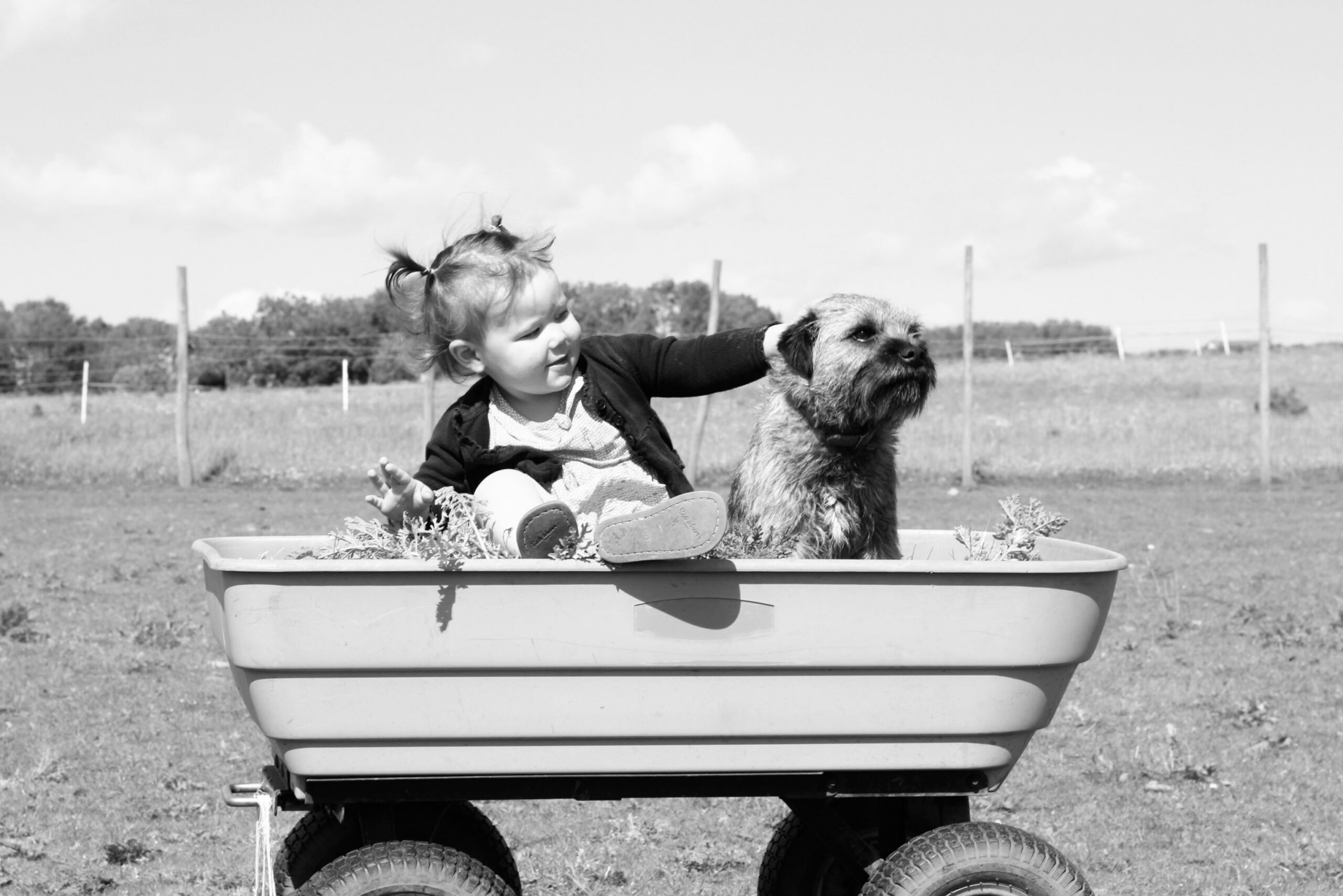 Black and white photo of a young girl and a dog sitting in a wagon in the countryside.