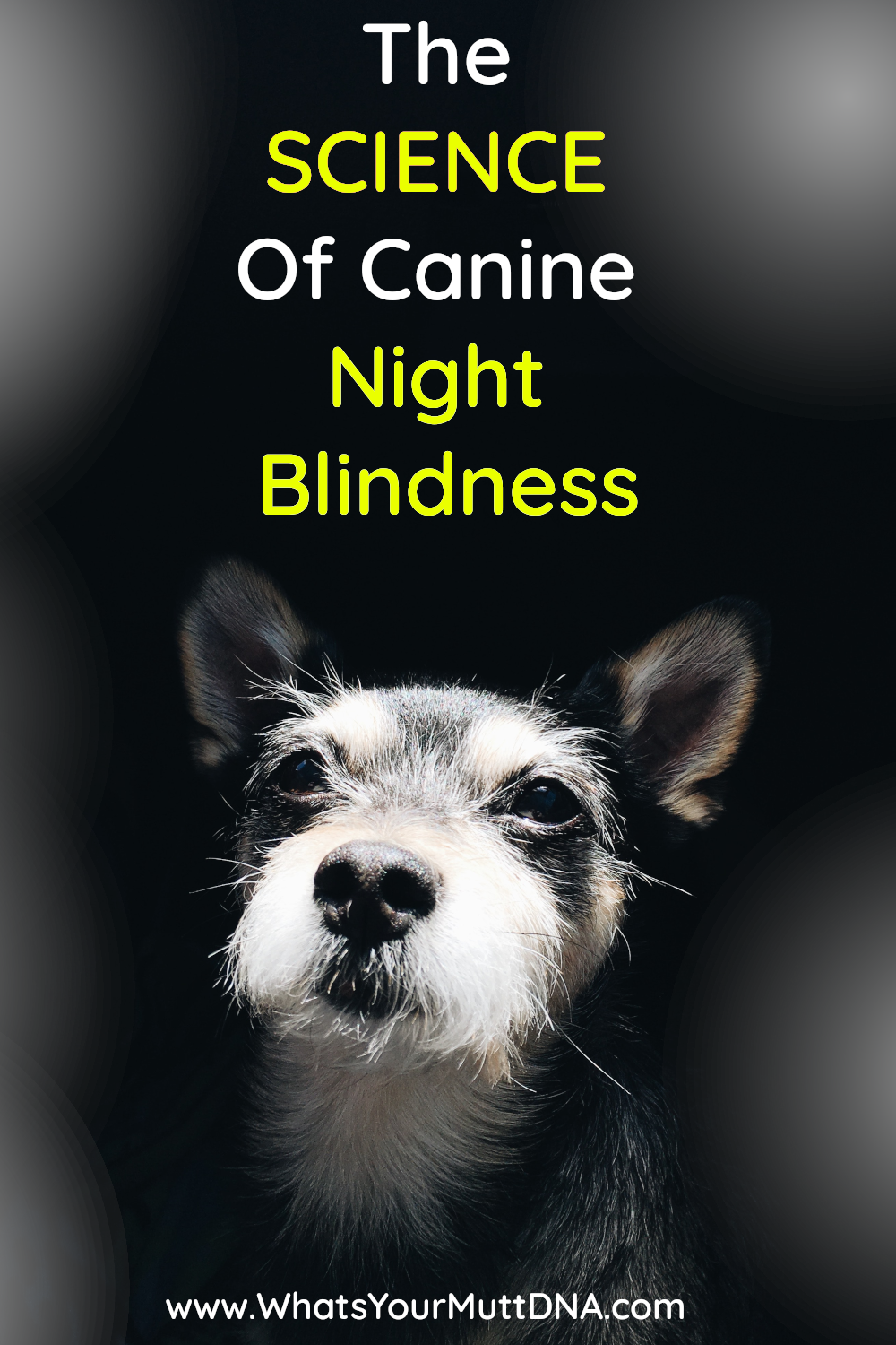 What's Your Mutt DNA dog blindness