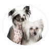 chinese crested circle