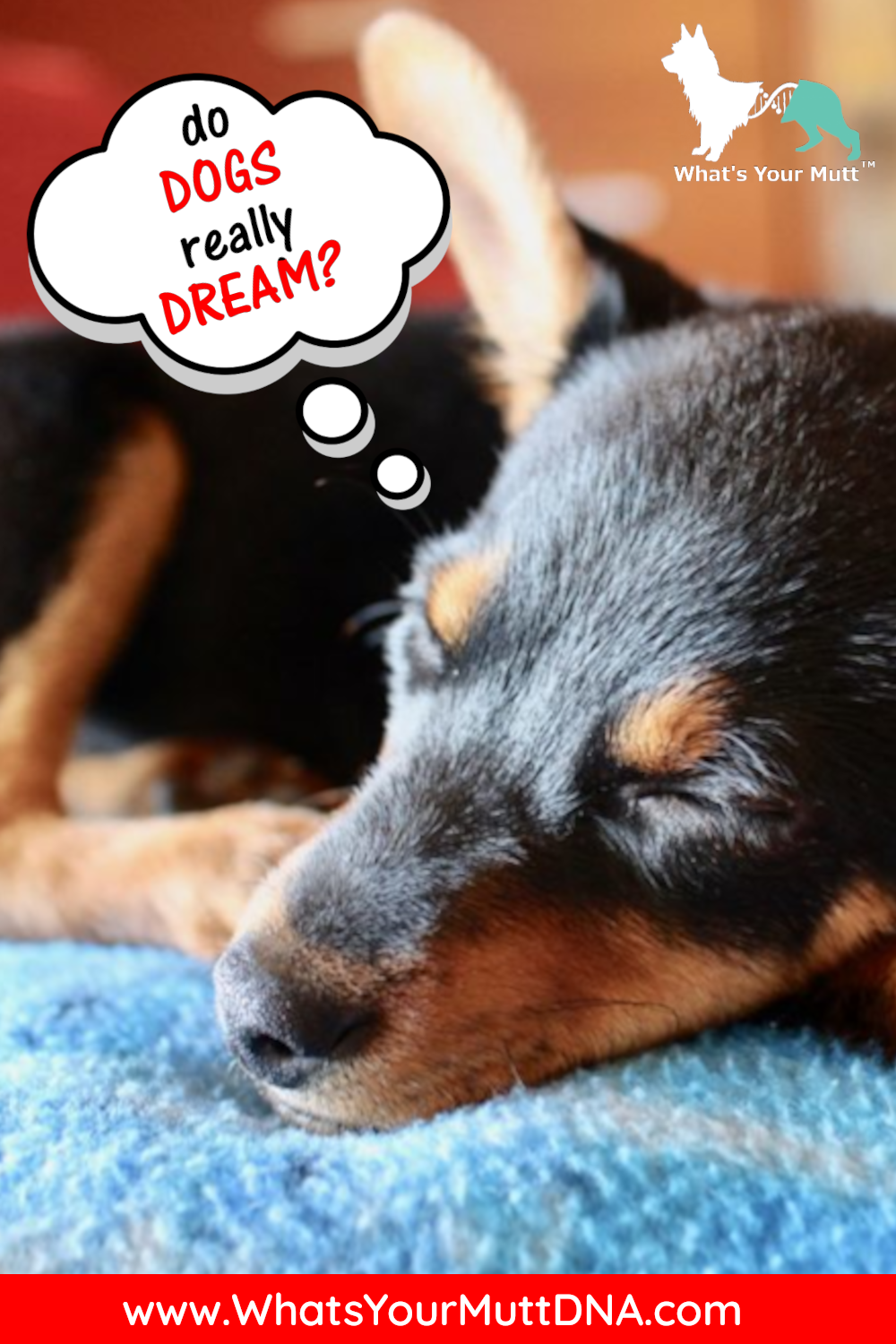 What's Your Mutt DNA do dogs dream