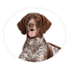 german shorthaired pointer circle
