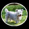 glen of imaal terrier circle