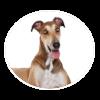 greyhound circle