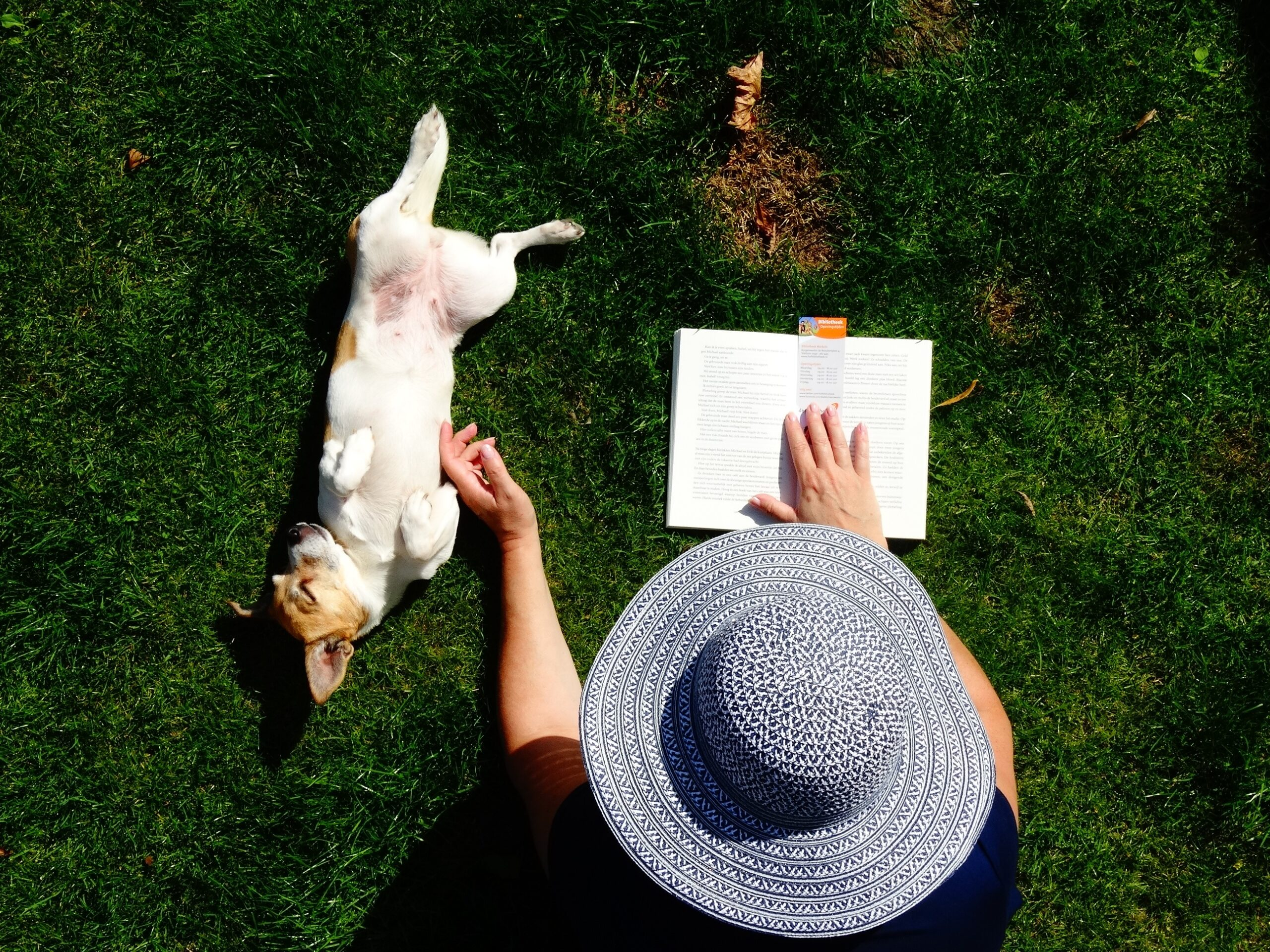 What's Your Mutt DNA An overhead view of a woman in a straw hat reading and petting her dog in a grassy field