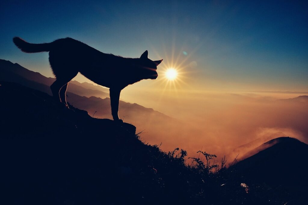 Silhouette of a dog walking down a mountain with the sunset in the background