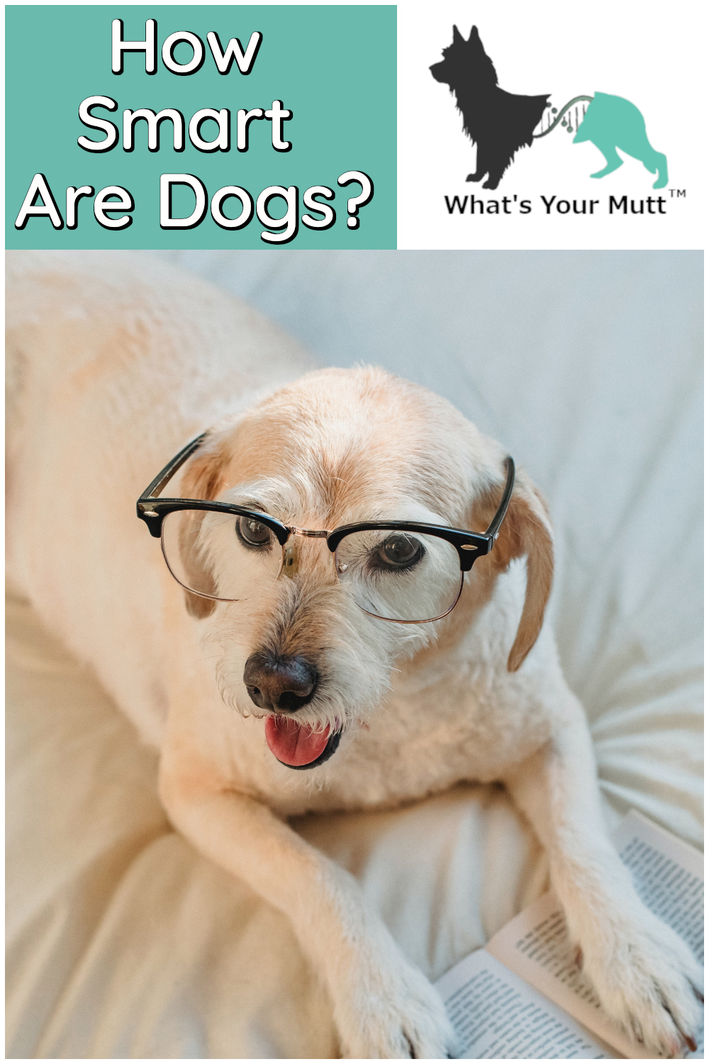 What's Your Mutt DNA how smart are dogs