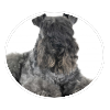 kerry blue terrier circle