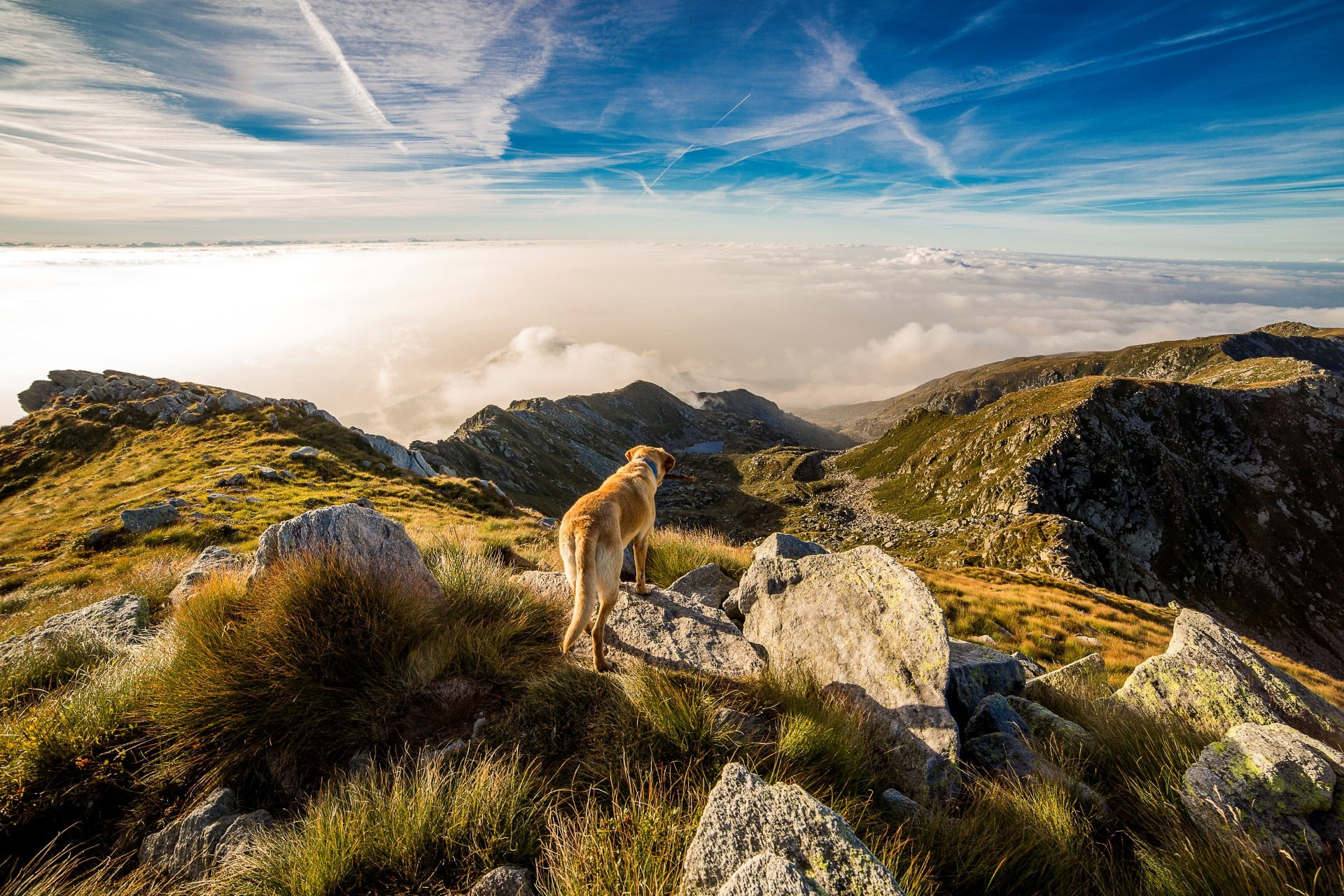 What's Your Mutt DNA Dog on top of mountain overlooking sea of clouds